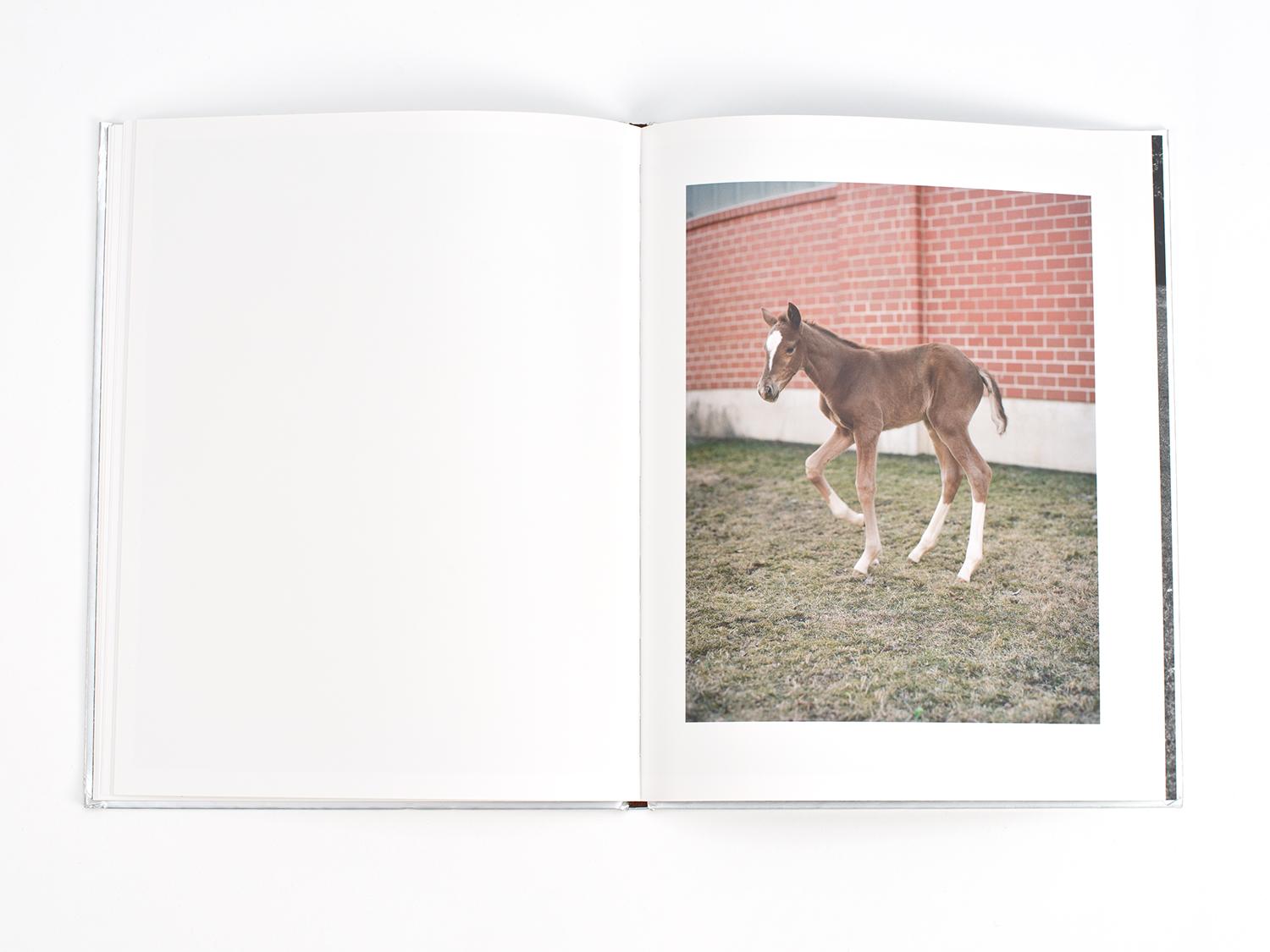 Clara Bahlsen, Pferde & Autos